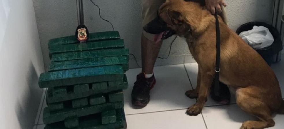 Um inquérito policial foi instaurado e o caso permanece sendo investigado.  (Foto: SSPDS/Divulgação)