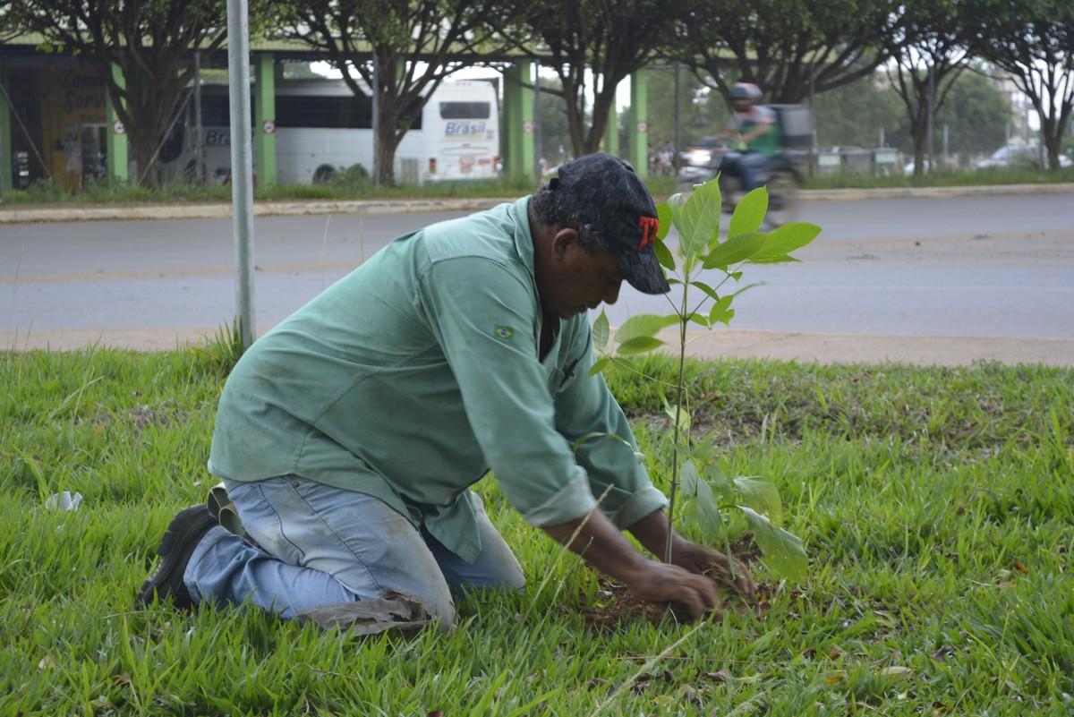 Mudas de árvores nativas são distribuídas para arborização em Ariquemes, RO