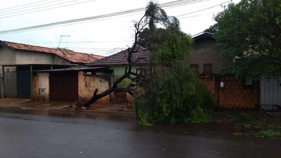 Árvore caída em rua de Tarumã, uma das cidades atingidas pelos ventos fortes — Foto: Arquivo pessoal