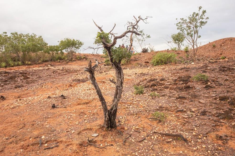 Quando a caatinga perde a vegetação, chuvas carregam a superfície do solo e deixam poucos nutrientes, favorecendo a desertificação. — Foto: Celso Tavares/G1