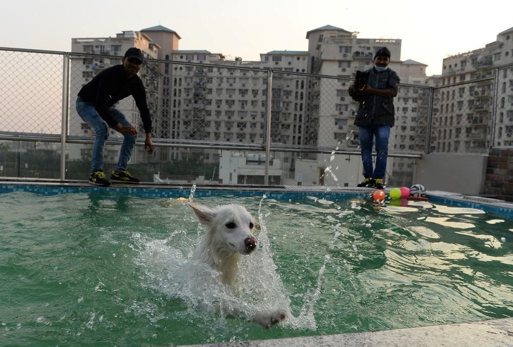 Hóspedes caninos também fazem exercício: aulas de natação (Foto: Sajjad Hussain/AFP )