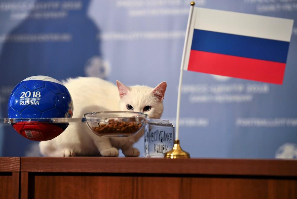 Gato 'vidente' Aquiles prevê vitória da Rússia na estreia (Foto: REUTERS/Dylan Martinez)