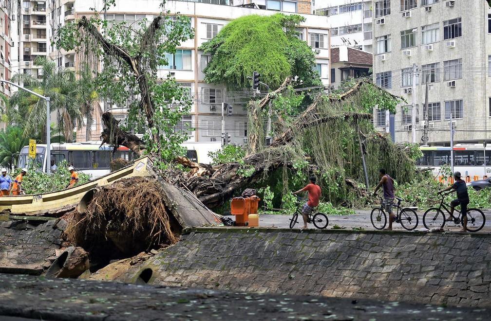 Ciclista observam a enorme árvore tombada pelo temporal à beira de canal na Gávea, na zona sul do Rio de Janeiro — Foto: Carl de Souza/CDS/AFP