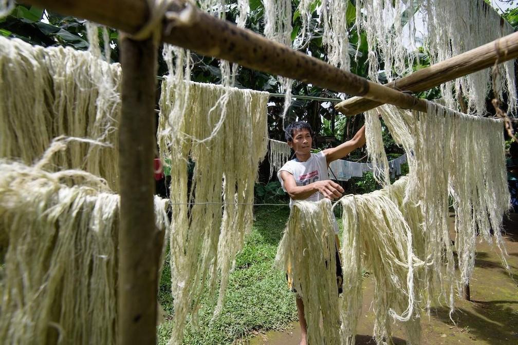 Produção do 'couro de abacaxi' a partir da fibra da planta nas Filipinas — Foto: Divulgação/Piñatex