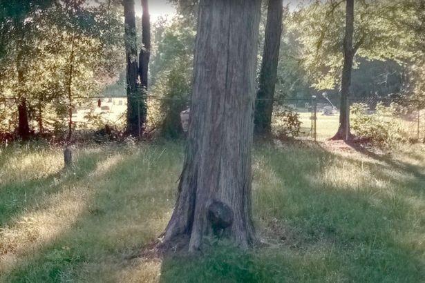 Suposta imagem de criança em cemitério (Foto: Reprodução/ Google)