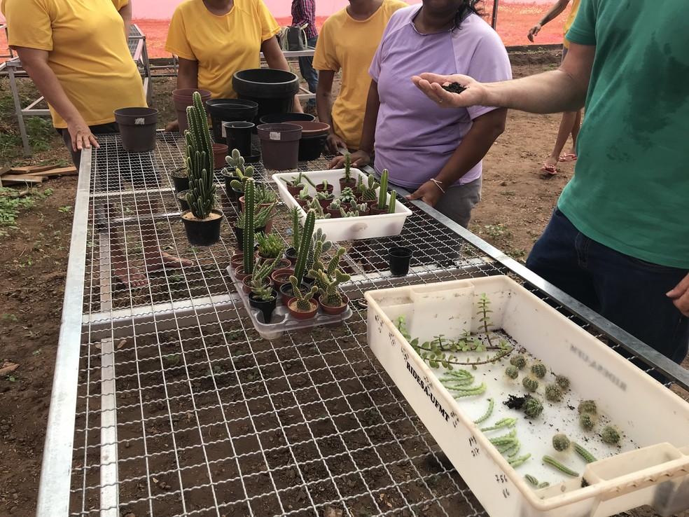 Plantas são cultivadas em estufa construída no presídio — Foto: Nara Assis / Sesp-MT