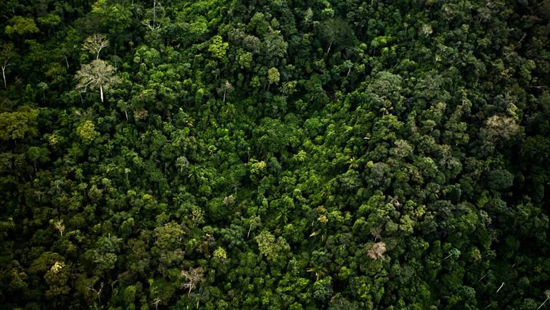 floresta-amazonia-amazonica (Foto: Globo Rural)