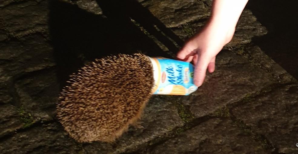 Ouriço ficou preso em copo de plástico de milk-shake sabor banana na Alemanha — Foto: Polícia de Bremerhaven/Twitter/Reprodução