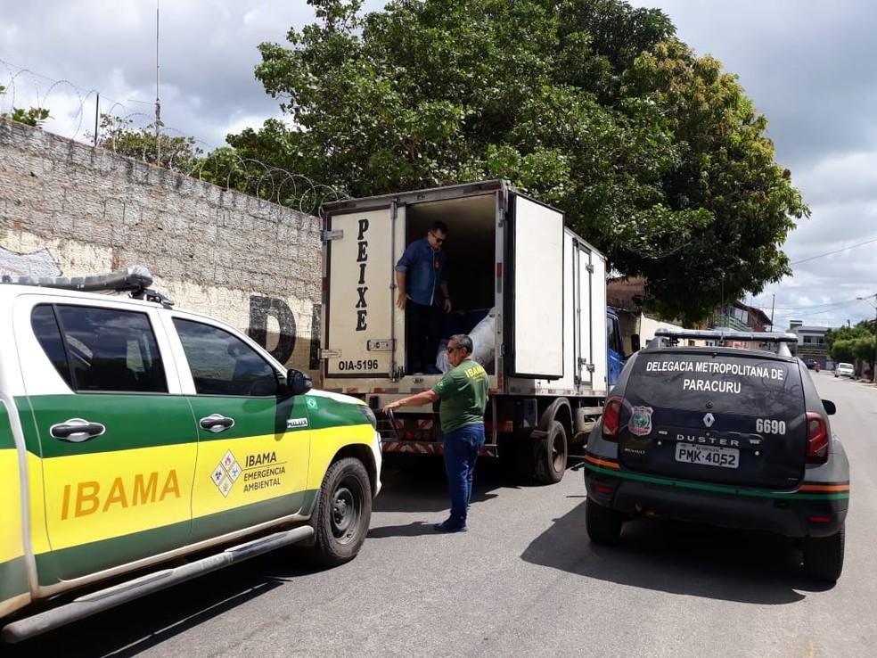 Polícia e Ibama apreendem lagosta em período de pesca proibida  — Foto: Divulgação