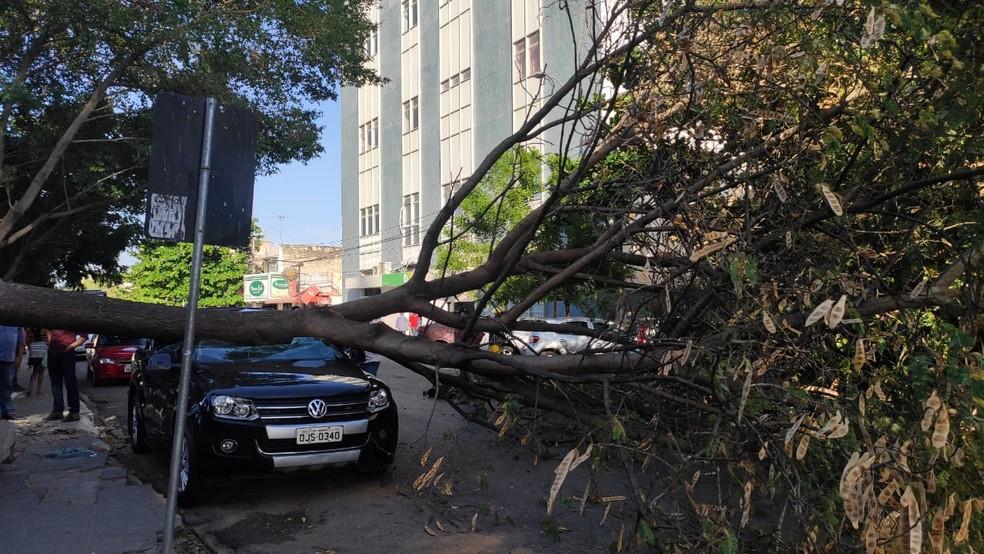 Carro ficou destruído após queda de árvore no centro de Mossoró  — Foto: Isaiana Santos/Inter TV Costa Branca