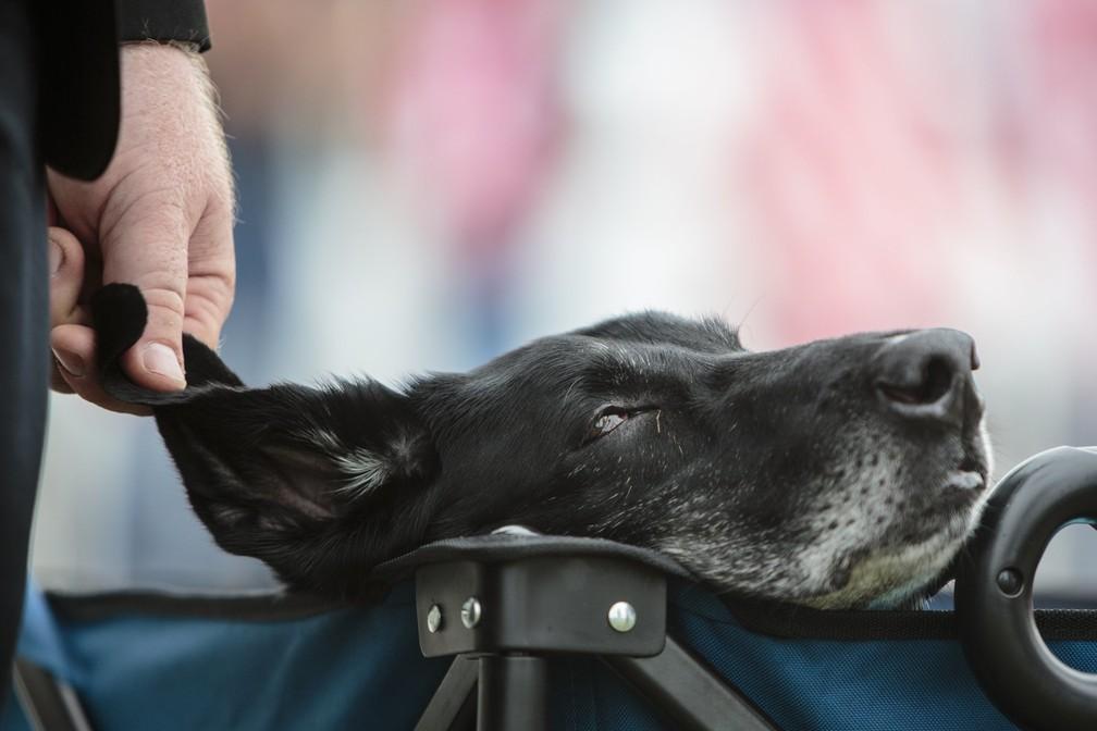 Cachorro foi diagnosticado com câncer terminal nos ossos (Foto: Joel Bissell/Muskegon Chronicle via AP)