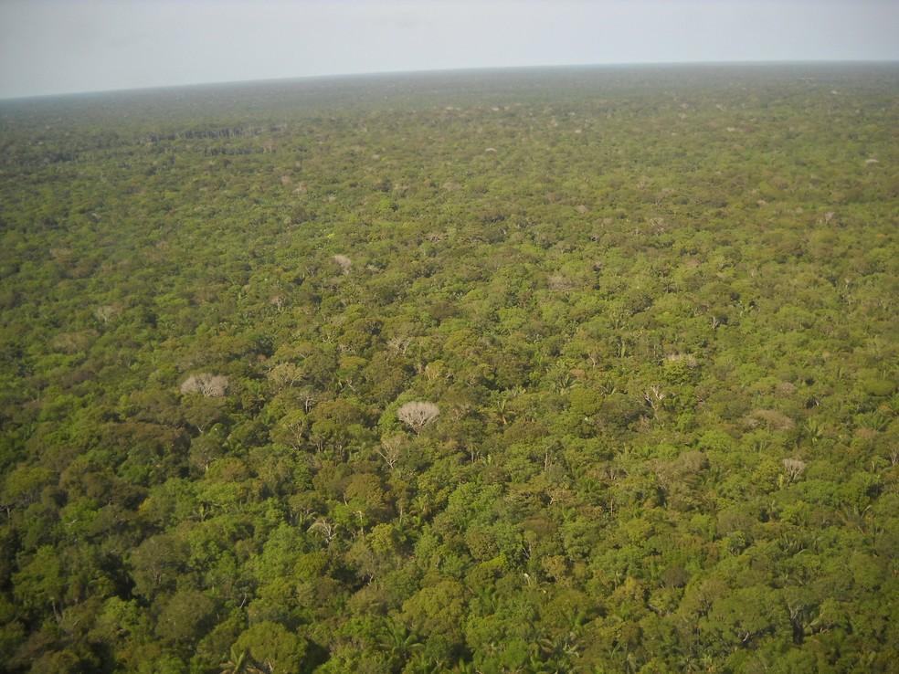 Destruição da Floresta Amazônica preocupa meteorologistas e ambientalistas.  — Foto: Rosa Maria/Pixabay