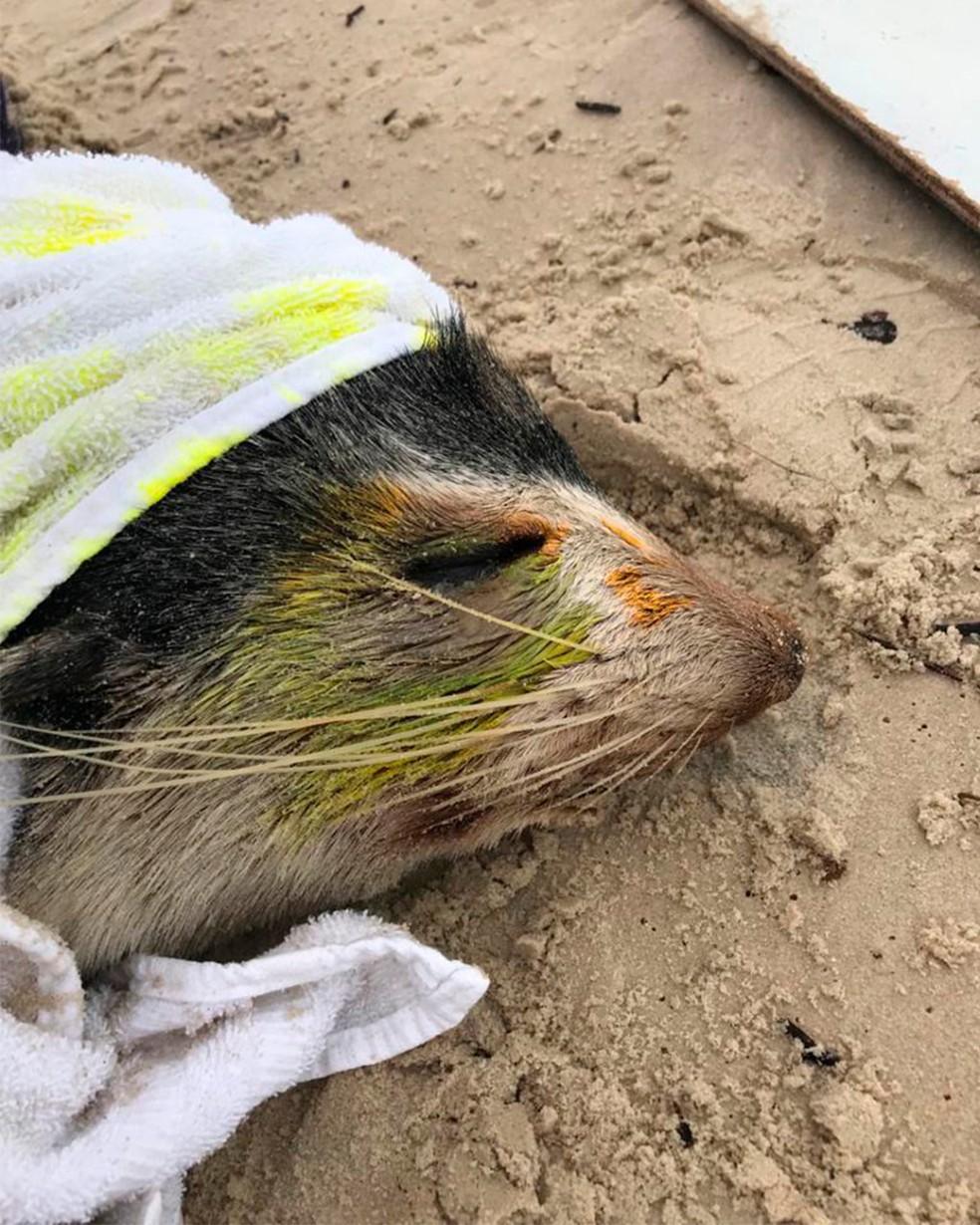 Animal recebeu colírio medicamentoso em razão de uma lesão superficial no olho, disse a veterinária — Foto: Regina Reis/R3 Animal