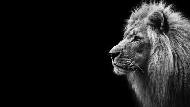 imposto de renda, leão, irpf (Foto: Thinkstock)