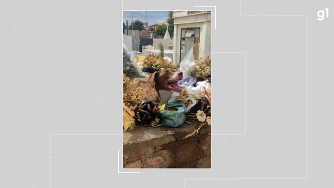 Cachorro procura moradia em túmulo de pediatra morto em clínica na Bahia
