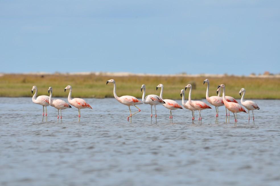 Mais de 255 espécies de aves migram para o Parque Nacional da Lagoa do Peixe, no município de Tavares, Região Sul do estado — Foto: Arquivo Pessoal