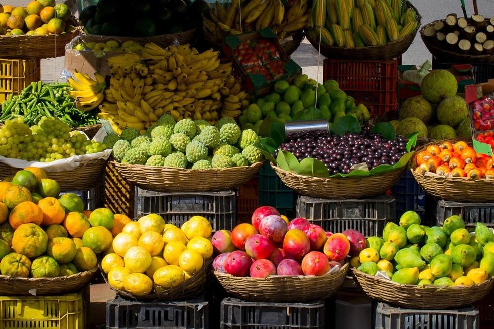 Inseto é uma das espécies de moscas-das-frutas que comprometem a produção e exportação dezenas de variedades de frutas acarretando sérios problemas econômicos — Foto: Divulgação