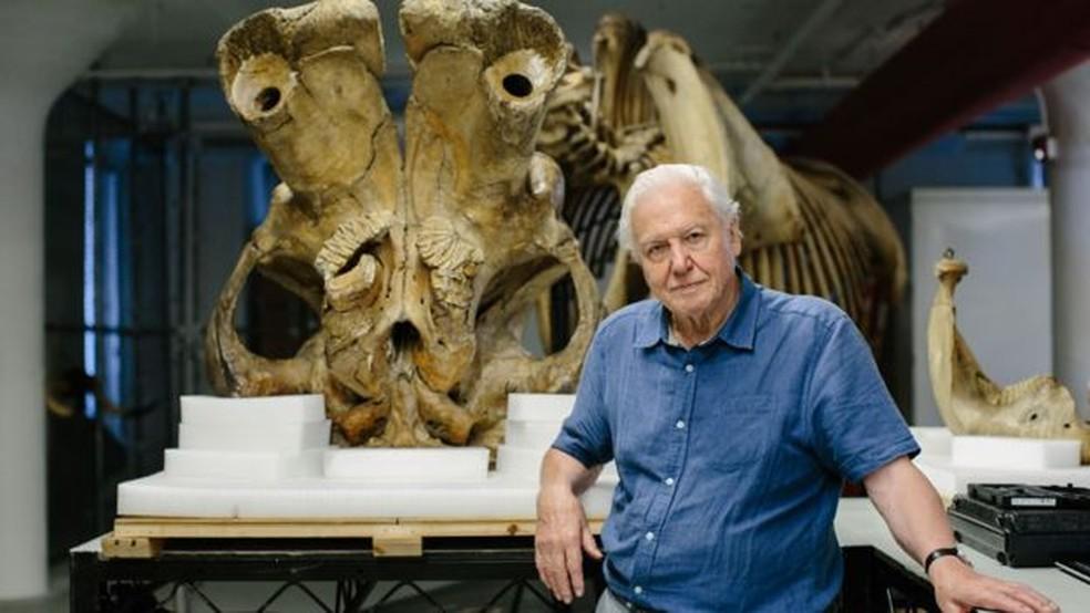 O naturalista David Attenborough e um grupo de cientistas examinaram o esqueleto de Jumbo para um documentário da BBC   (Foto: Humble Bee Films)
