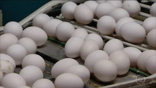 Países da Europa recebem ovos contaminados com pesticida