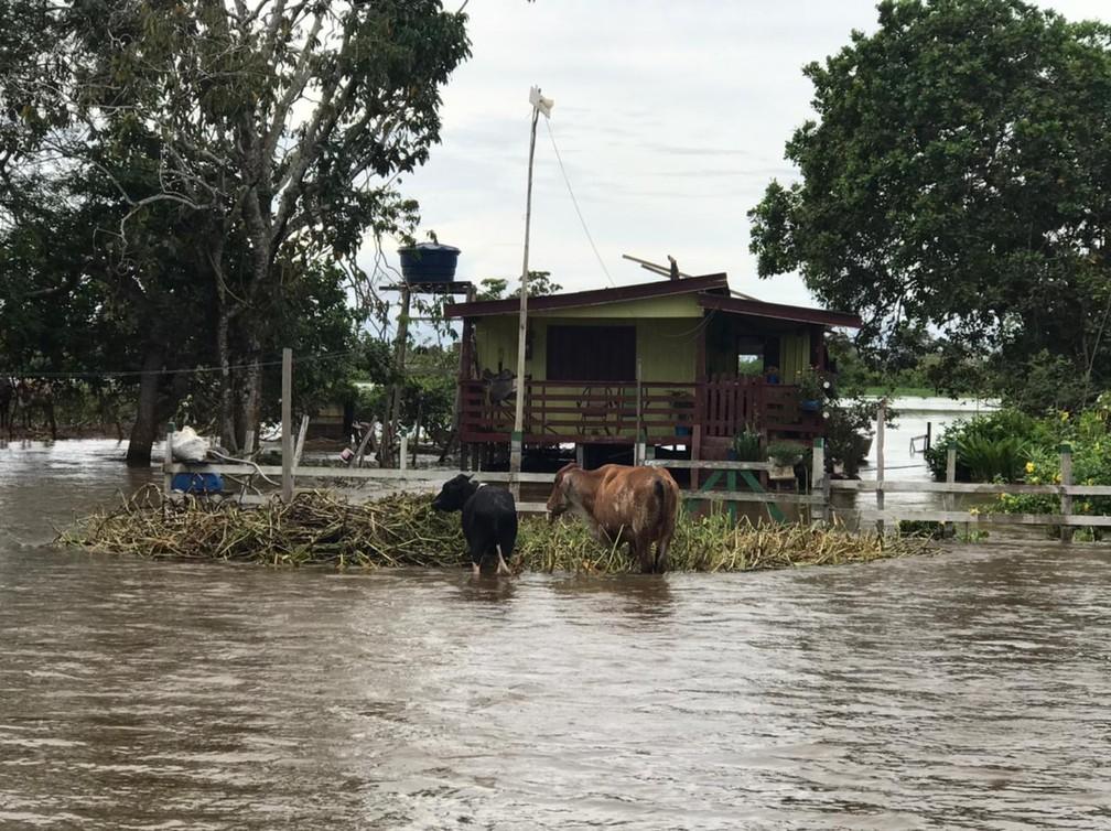 Prejuízo com a produção agropecuária é estimado em R$ 1 milhão — Foto: Jucélio Paiva/Rede Amazônica