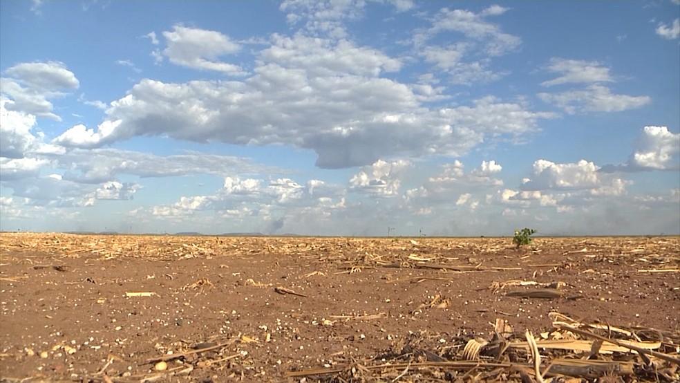 Solo ainda precisa ser molhado pela água das chuvas (Foto: Reprodução/TV Mirante)