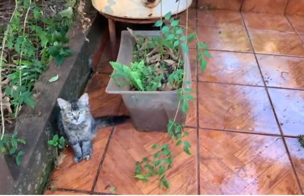 Gata Mili, ao lado de vaso onde cobra cascavel foi encontrada, em Bandeirantes (MS). — Foto: Guilherme do Carmo/Foto