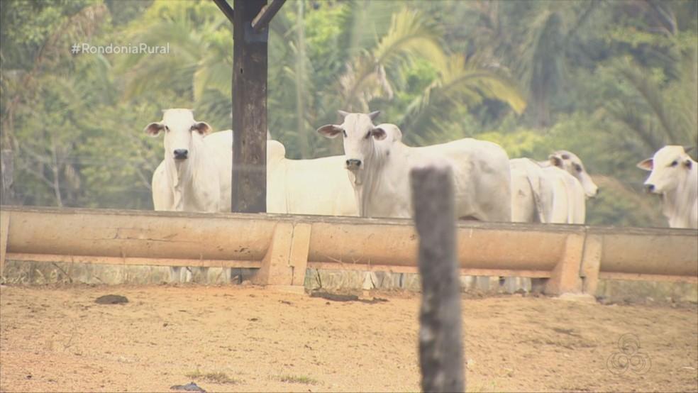 Pecuarista busca aliar produtividade na pecuária a preservação ambiental — Foto: Reprodução/ Rede Amazônica