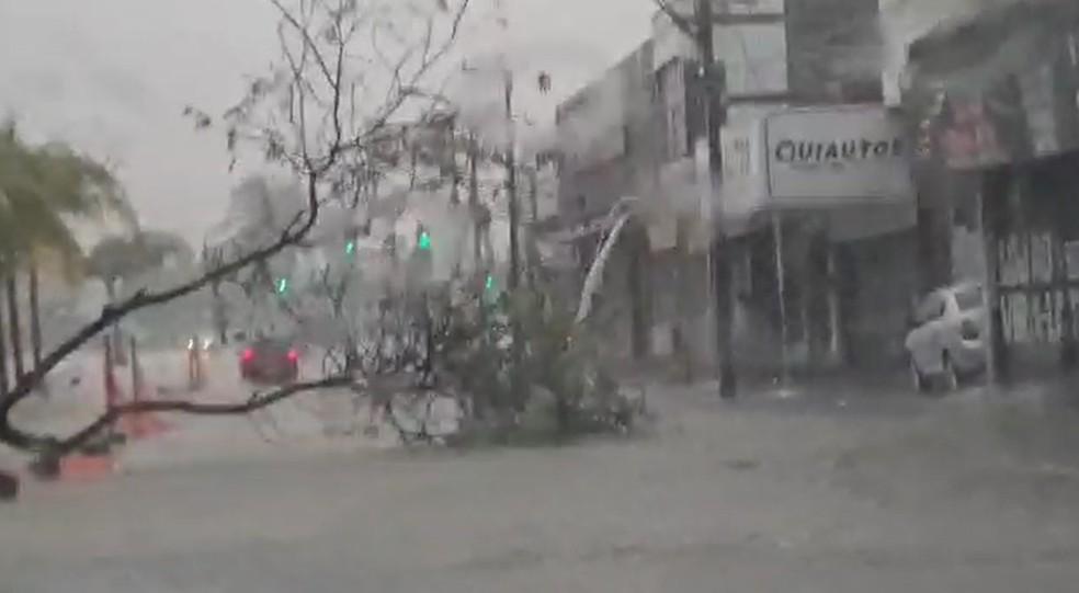 Árvore tomba na Avenida José Bastos em dia de chuva forte em Fortaleza — Foto: Reprodução