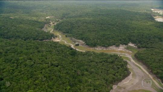 Rica em biodiversidade, Amazônia não é pulmão do mundo