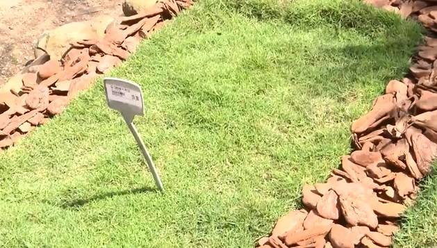 Conheça os tipos de gramas mais comuns no Paraná e saiba qual o ideal para cada situação