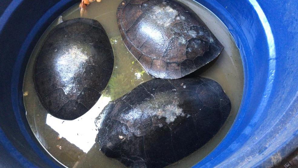 Jabutis também foram achados dentro de casa — Foto: Polícia Civil/Divulgação