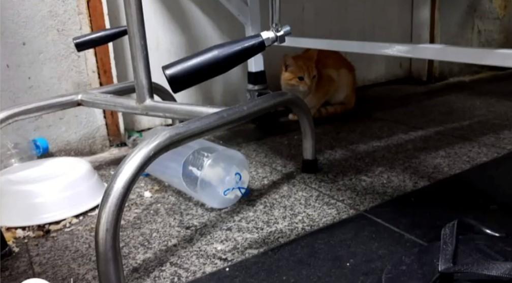 Gato foi flagrado embaixo de maca no Hospital Ferreira Machado, em Campos, no RJ — Foto: Reprodução/ Inter TV