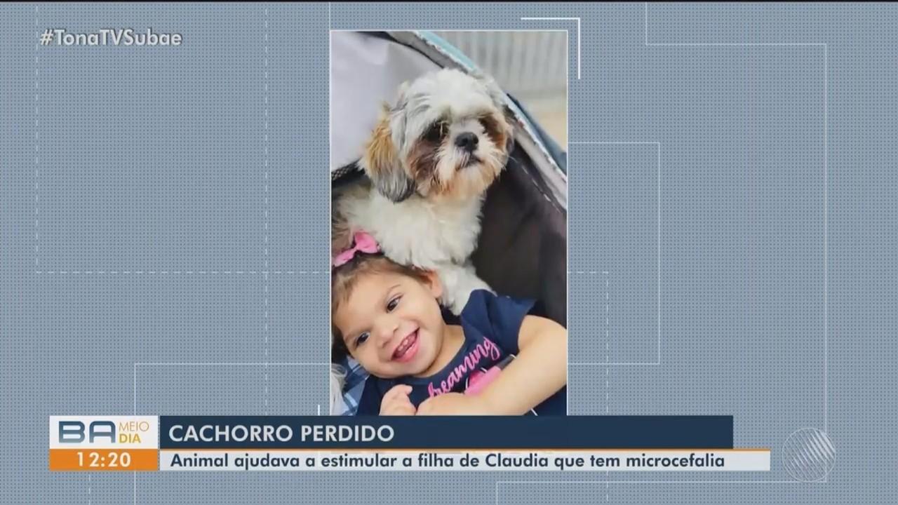 Família procura cachorro perdido que ajuda no desenvolvimento de criança com microcefalia