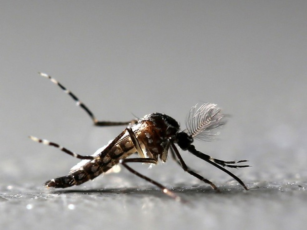 Mosquito aedes aegypt — Foto:  Paulo Whitaker/Reuters