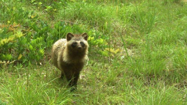 BBC - Ação humana pode ser pior do que radiação para a vida selvagem, diz pesquisador (Foto: JAMES BEASLEY)