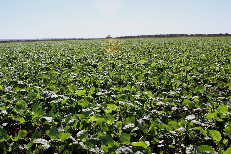 Plantação de soja no Tocantins, no Cerrado do Brasil — Foto: Adapec/Divulgalção