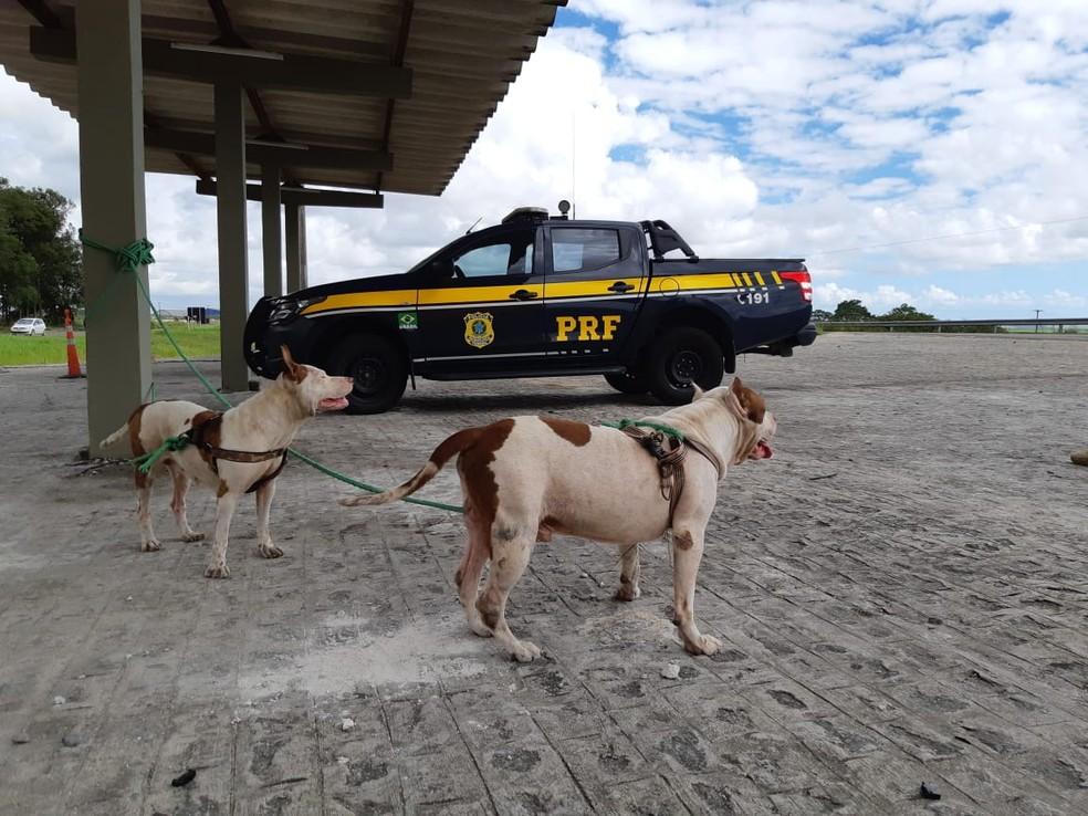 Cães, mãe e filho, foram achados às margens da BR-101, em Igarassu, no Grande Recife, e levados aos posto da PRF — Foto: PRF/Divulgação