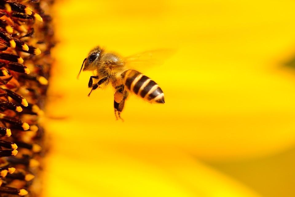 Cientistas afirmam que abelhas têm noções básicas de matemática - Revista Galileu | Ciência