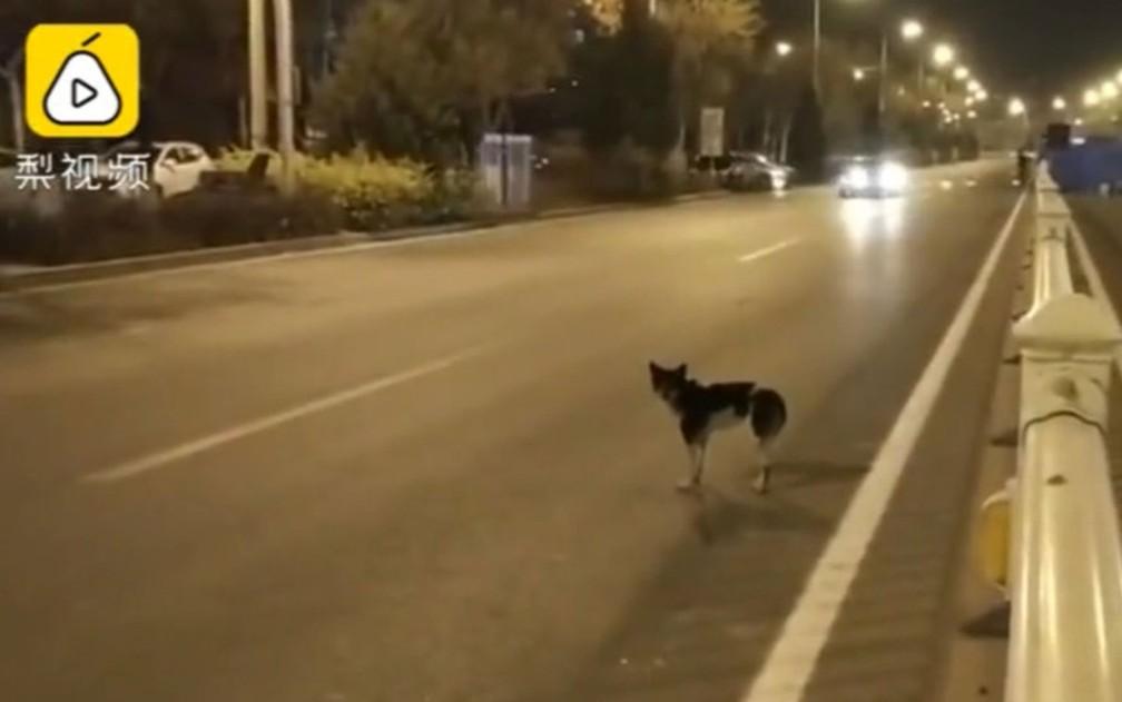 Usuários de redes sociais manifestaram preocupação com o bem-estar do cão — Foto: Pear Video