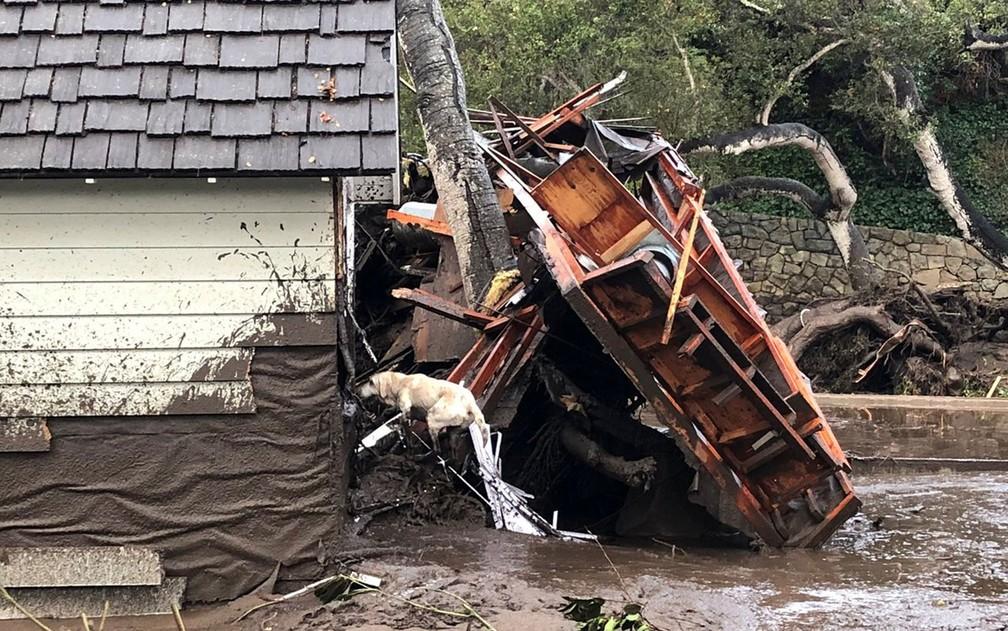 Cão farejador procura vítimas entre escombros de casas destruídas por deslizamento em Montecito, na Califórnia, na terça-feira (9) (Foto: Mike Eliason/Santa Barbara County Fire Department/Handout via Reuters)