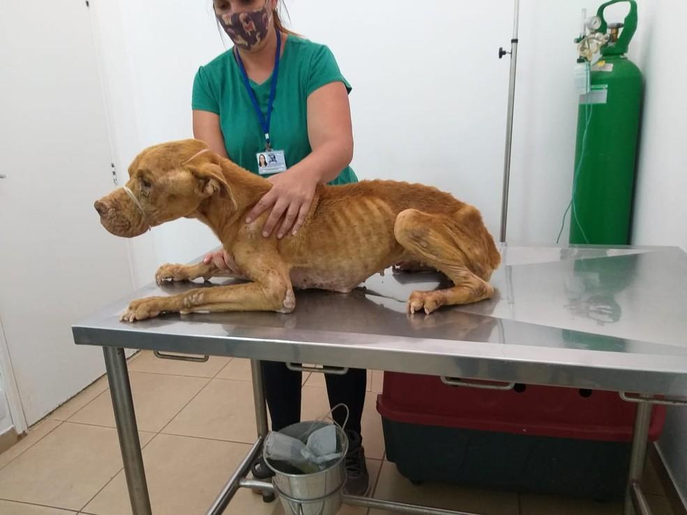 Animal já está recebendo tratamento após ser resgatado com base em uma denúncia — Foto: Polícia Civil/Divulgação