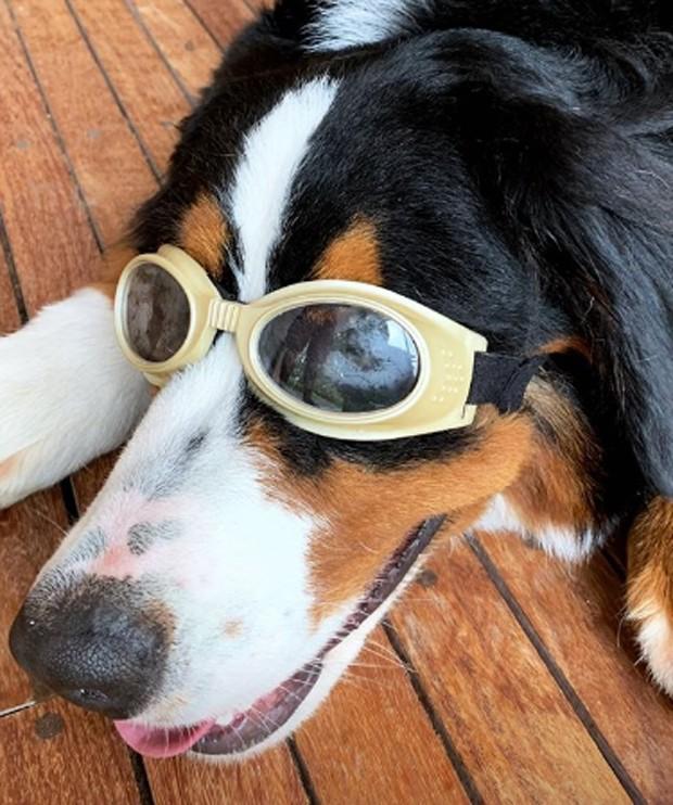 O cachorro de Luciano Huck (Foto: Reprodução Instagram)