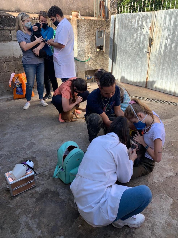 Protetores e mais três veterinários fizeram mutirão para examinar cães em Rio Claro — Foto: Giselle Pfeifer/Arquivo Pessoal