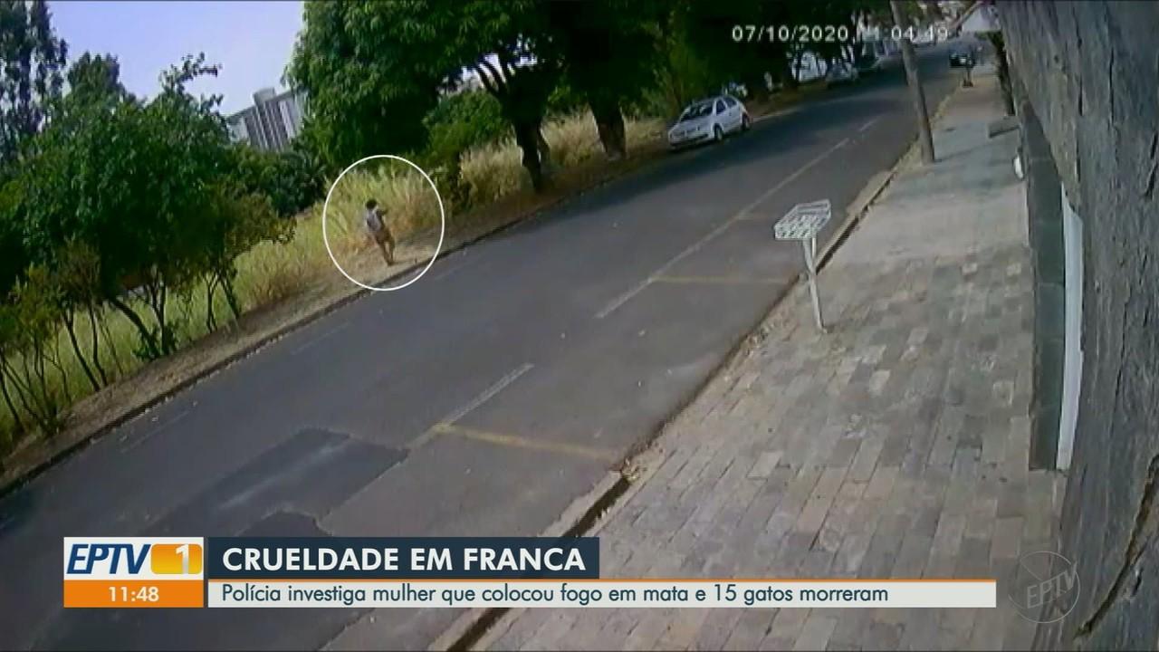 Polícia Civil investiga mulher que colocou fogo em mata e matou 15 gatos em Franca, SP