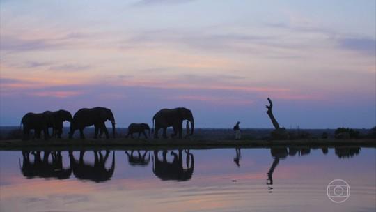 Elefantes atravessam fronteira para escapar da morte e formar nova família
