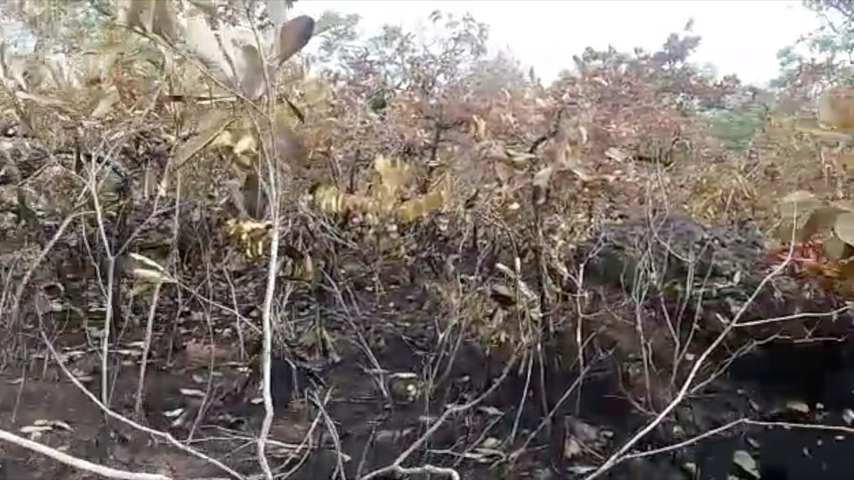 Incêndio em parque com arte rupestre de MS destrói cerca de 13% da vegetação; veja vídeo