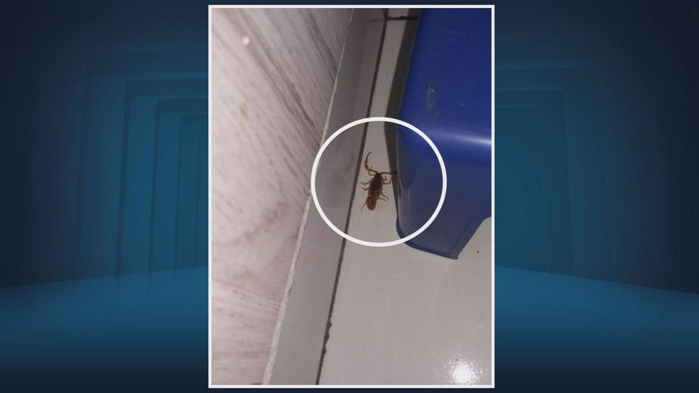 Moradores registraram a presença de escorpiões dentro dos apartamentos (Foto: Reprodução/EPTV)