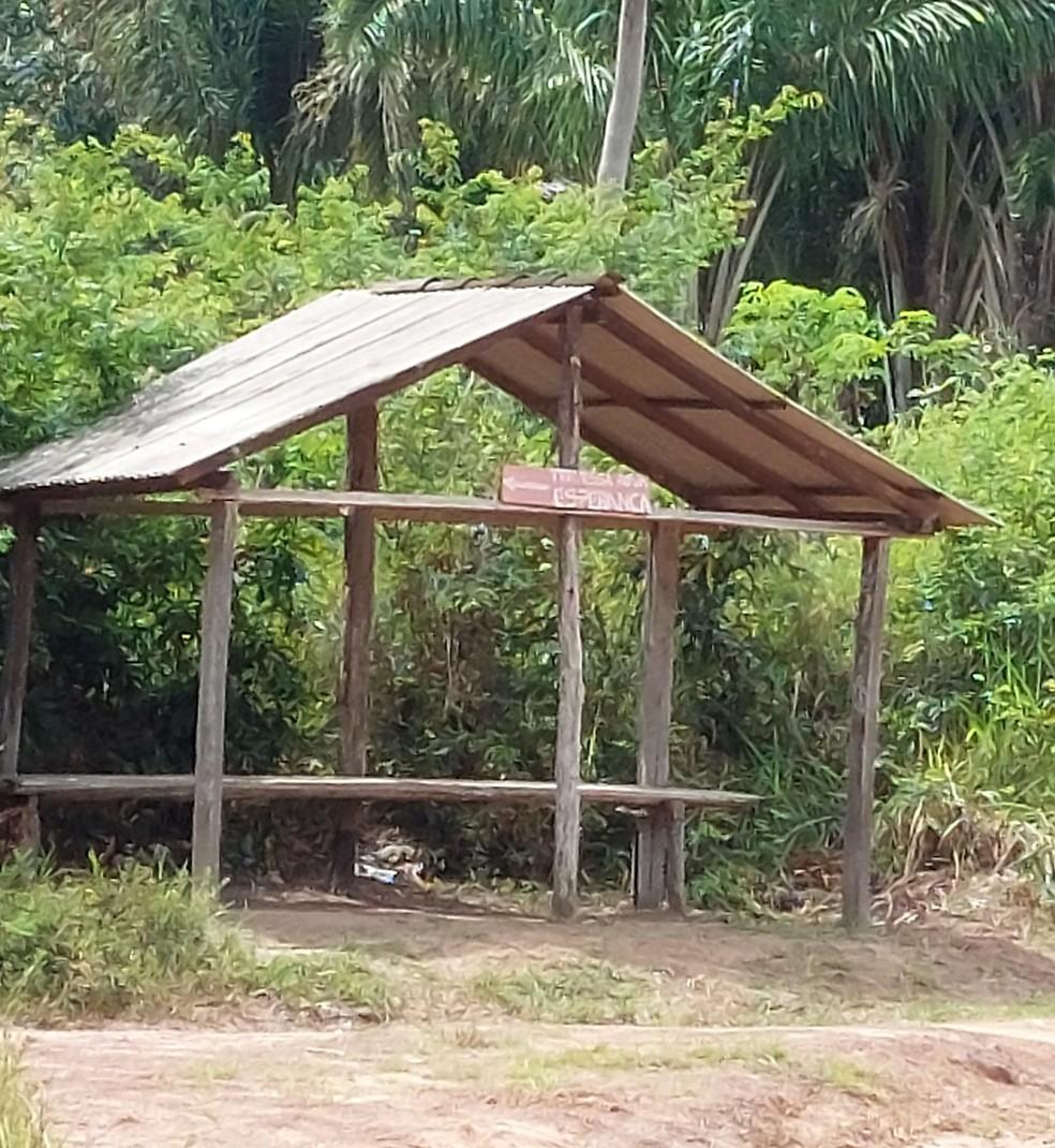 Embrapa flagra ação de madeireiros ilegais em Moju, no Pará. — Foto: Reprodução / Embrapa Amazônia Oriental