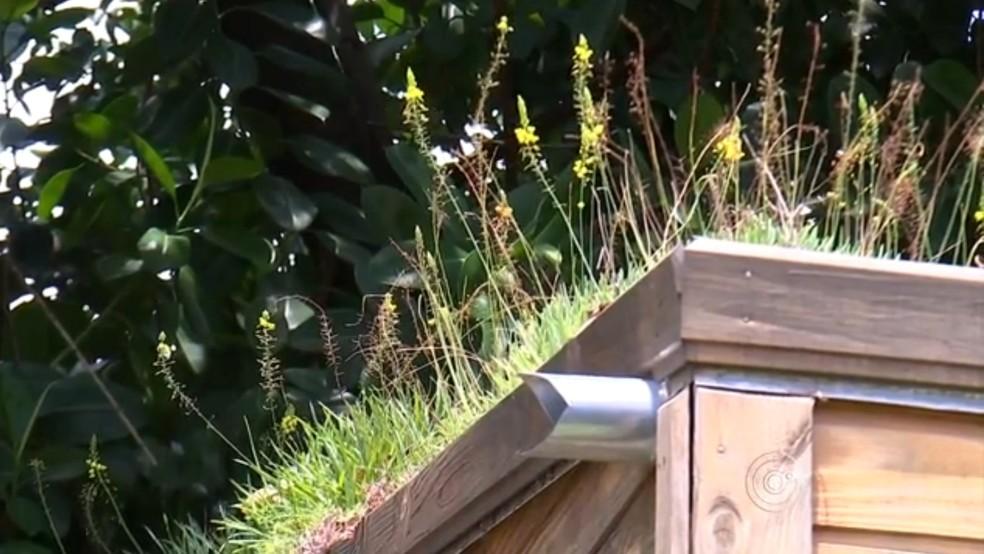 Telhados verdes ajudam a deixar a casa menos abafada — Foto: Reprodução/TV TEM