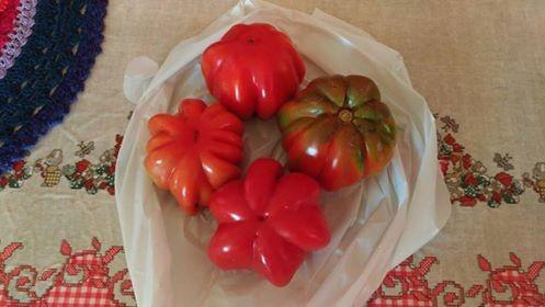 Tomate  (Foto:  Raquel Vilczak/ Arquivo Pessoal)